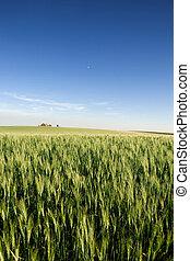 Prairie Farmland - A landscape with wheat and a farm on the ...