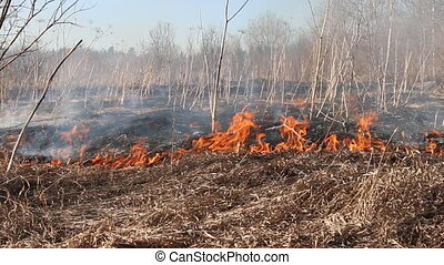 Dry grass blazes among bushes, fire in bushes area - Prairie...