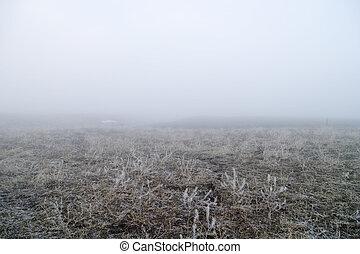Prairie Fog