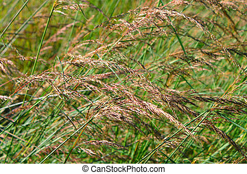 Background of prairie grasses in Castle Rock State Park of Illinois.