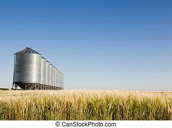 Prairie Harvest - A wheat field with grain bins