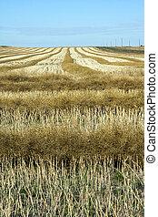 Prairie harvest.