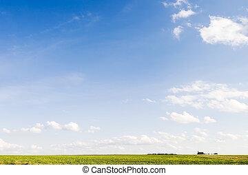 prairie, horizon