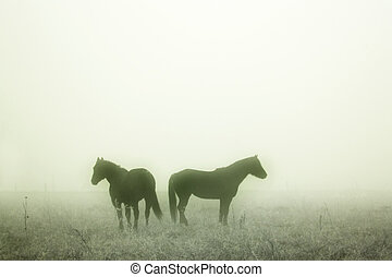Prairie Horses - Horses in the mist