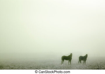 Prairie Horses - Horses in the mist