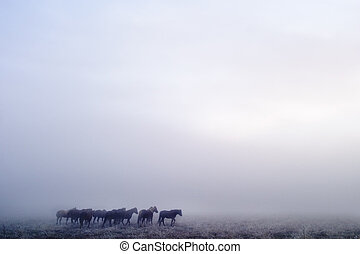 Prairie Horses - Horses on a foggy day in winter, on the...