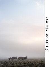 Prairie Horses - Horses in the fog on the prairie.