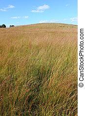 Prairie in Illinois