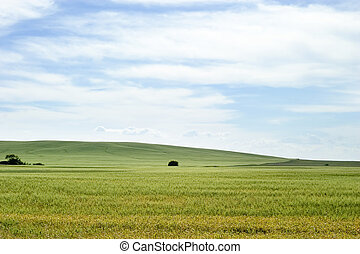 Prairie Landscape - Prairie horizon in rural Saskatchewan.