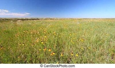 prairie, national, buffle, trouée