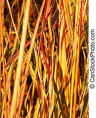 Prairie Plant Background