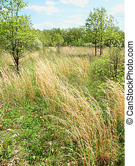 Braidwood Dunes and Savanna Nature Preserve - Prairie scene...