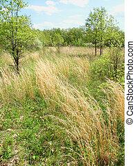 Braidwood Dunes and Savanna Nature Preserve - Prairie scene...