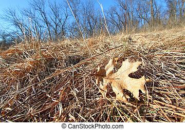 Prairie Scene - Illinois