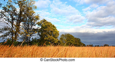 Prairie scene in Illinois