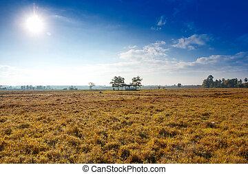 Prairie sky.