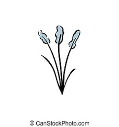 Prairie smoke mayflower, Pulsatilla patens early bloomers in...