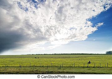 Prairie Summer Landscape