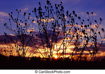 Prairie Sunset Landscape Illinois