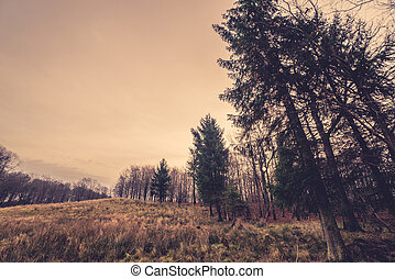 Prairie with tall pine trees