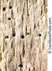 pramen, strom, detail