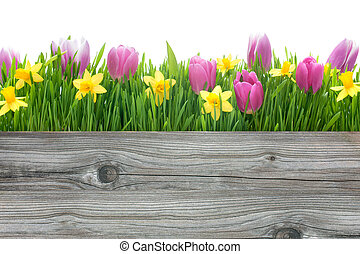 pramen, tulipán, a, narcis, květiny