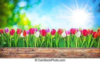 pramen, tulipán, květiny