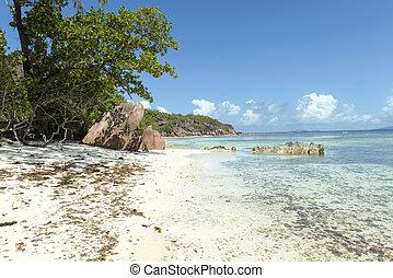 praslin, セイシェル, lazio, トロピカル, 砂ビーチ, anse, 島
