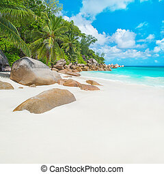 praslin, seychelles, île, anse, plage tropicale, georgette