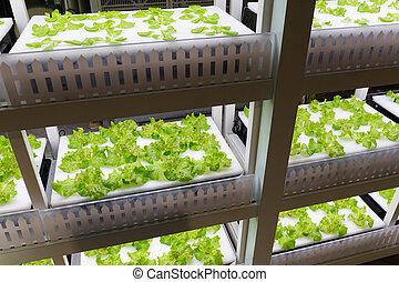 prateleira, hydroponics