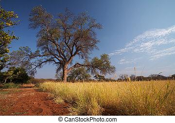 prateria, africano, savana