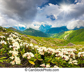 prati alpini, in, il, caucasus, montagne.