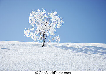 prato, albero, nevoso