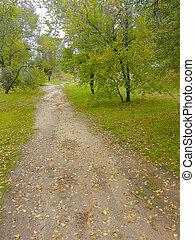 prato, albero, verde, sentiero, attraverso, erba