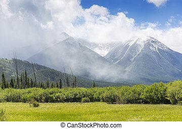 prato, con, montagne, in, il, fondo, -, banff np, canada