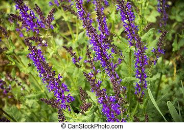 prato, fiori, inthe, viola, primavera