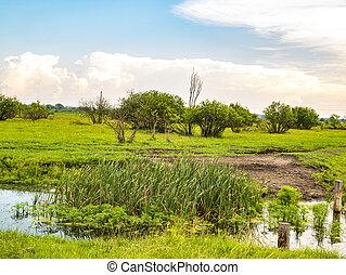 prato, nuvoloso, horizon., fiume, cielo, verde