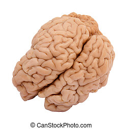 prawdziwy, mózg