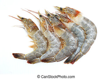 prawn on white background