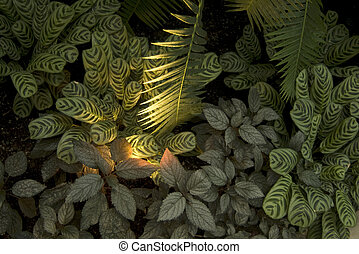 Prayer and Palm Plants Groundcover - Photo looking down on...
