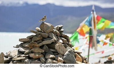 Prayer flag. Tibet - Prayer flag. The bird takes off from a...