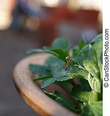 Praying Mantis Baby In Garden