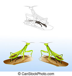 Set of praying mantises in different styles