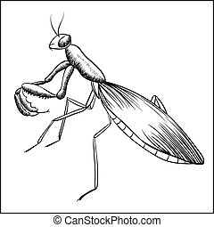 Praying Mantis Sketch Black Contour monochrome Insect Illustration Isolated on White Background