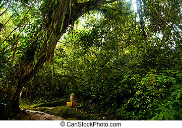 Pre-Columbian Statue - A pre-columbian statue in a forest...