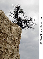 bush leaning off the top of a hoodoo in cloudy weather