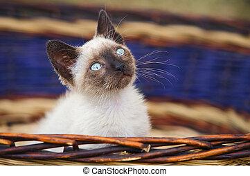 Precious little cat in a basket of wicker