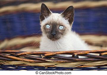 Precious little cat in a basket