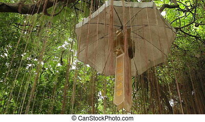Precious Umbrella among air tree roots. Wat Saket the Golden...
