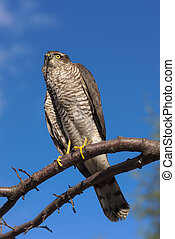 predator in the sky